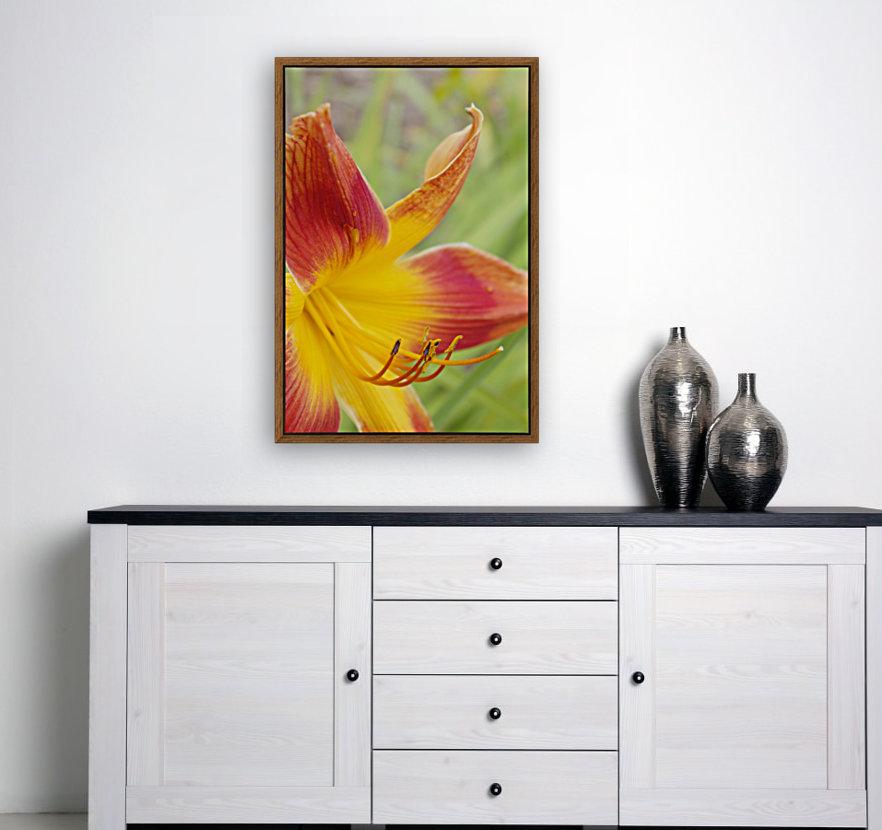 Peach Lilly  Art