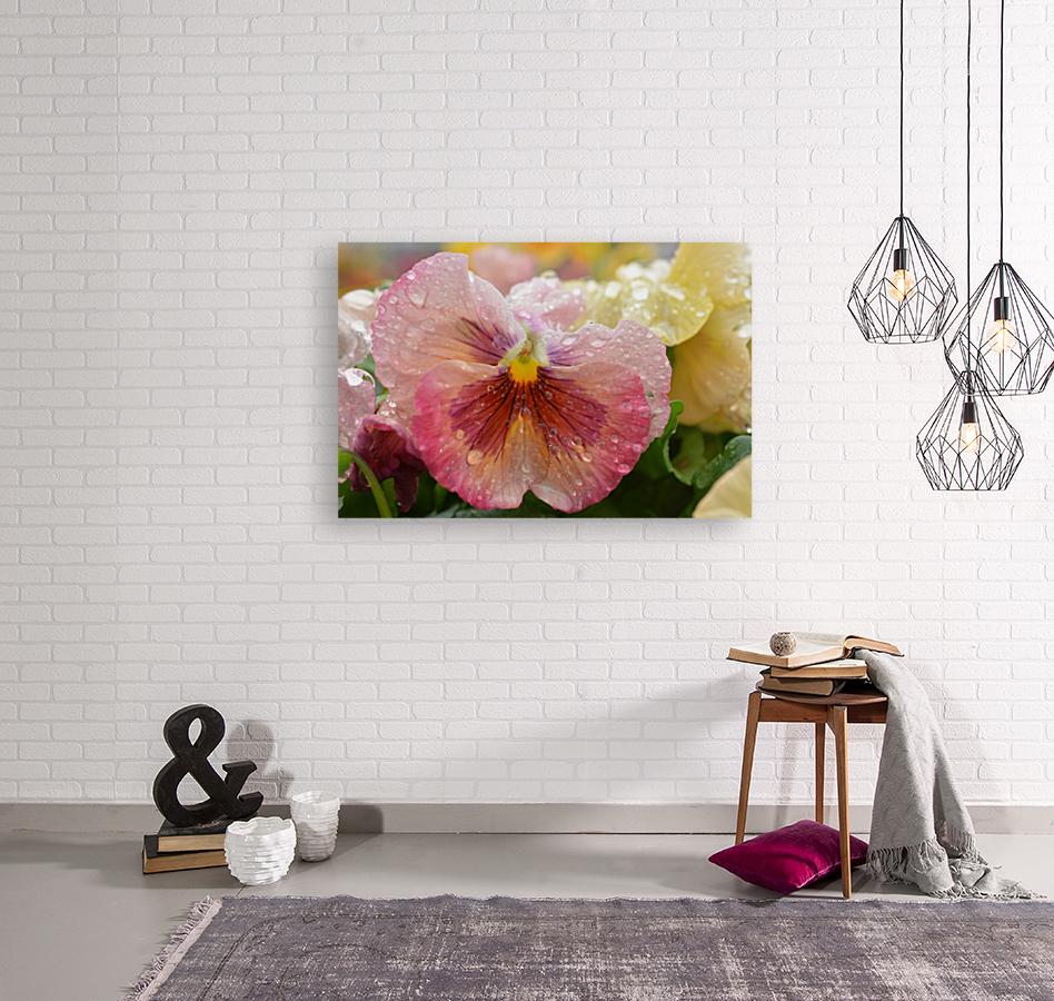Pink Flowers Photograph  Art