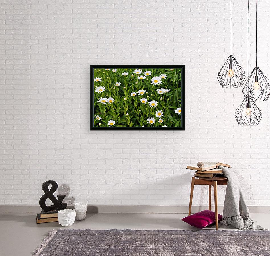 Dow Gardens Daisies 062618  Art
