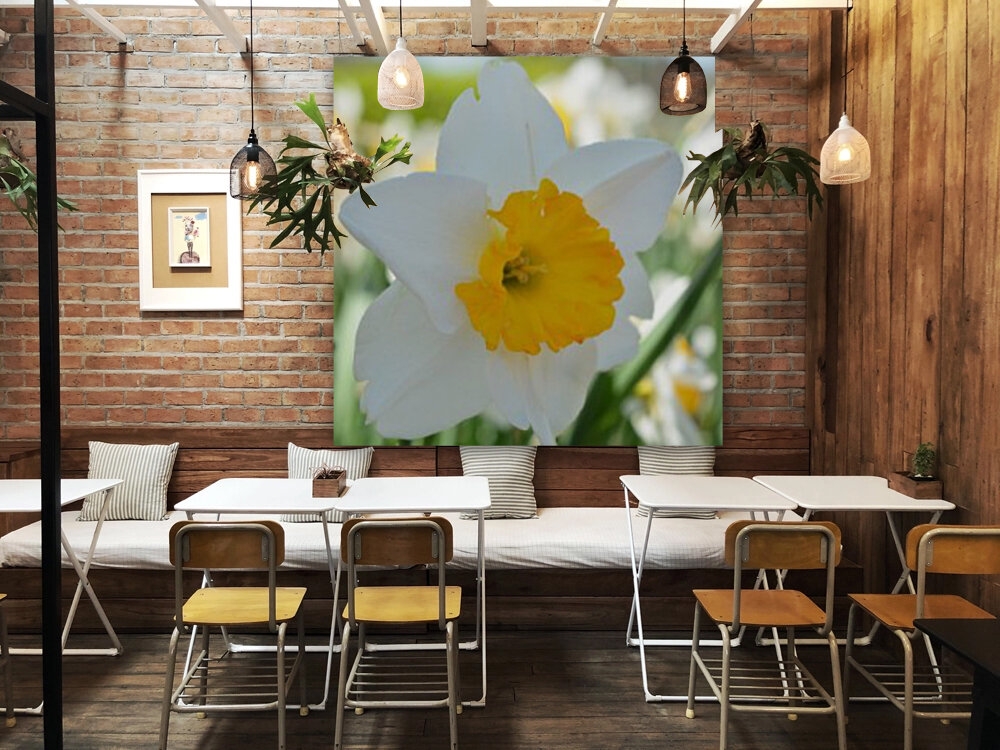 White Daffodil Photograph  Art