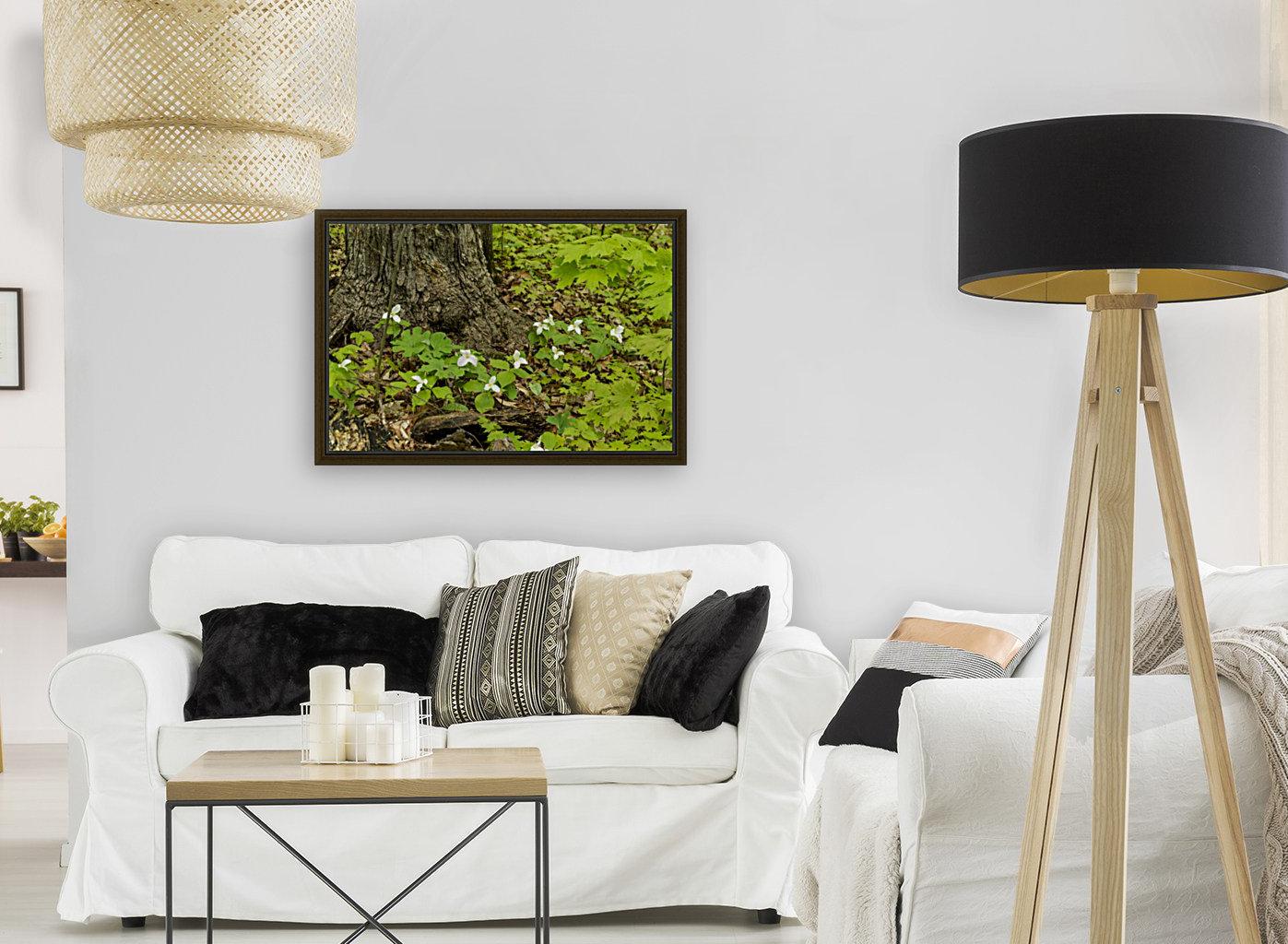 Trillium Woods 10  Art