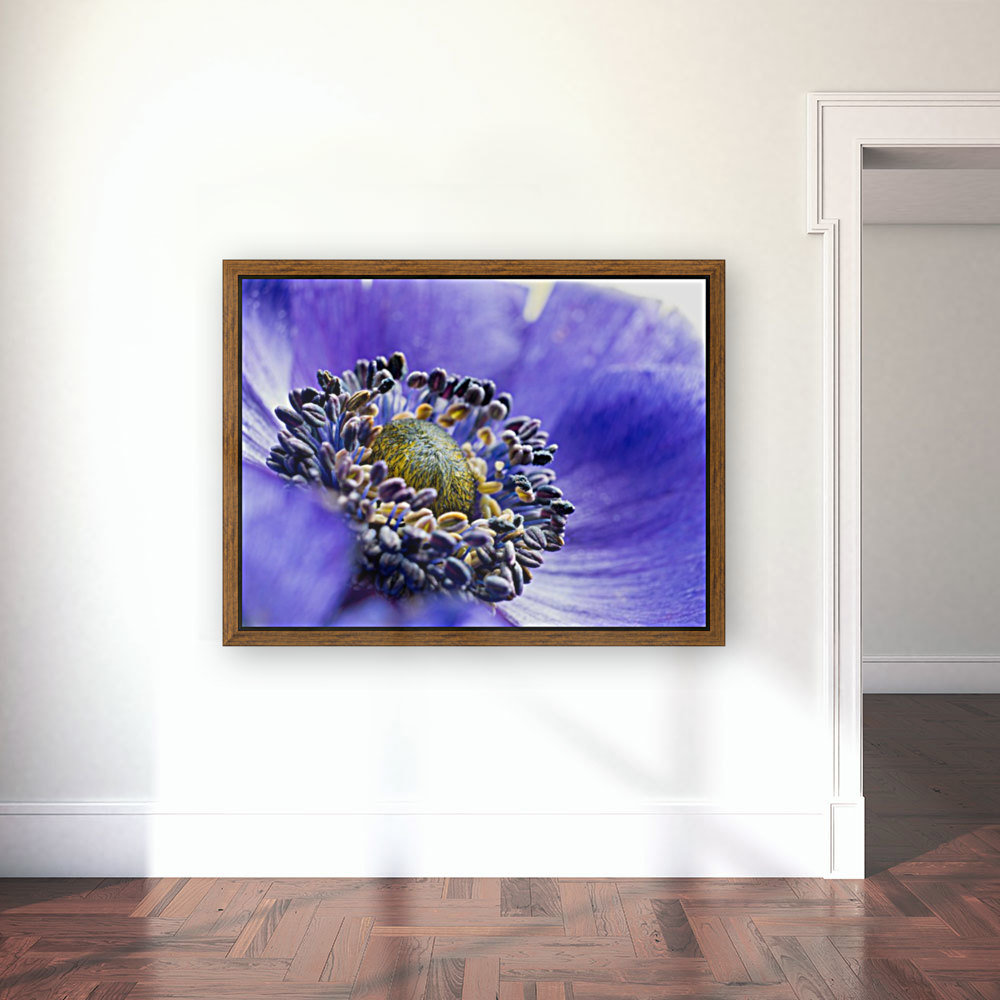 Blue Flower Anemone Close-up Macro  Art