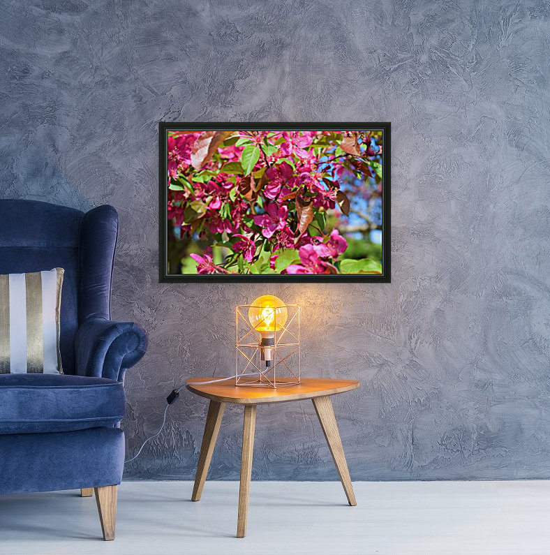Ticonderoga Crab Apple Flowers in May  Art