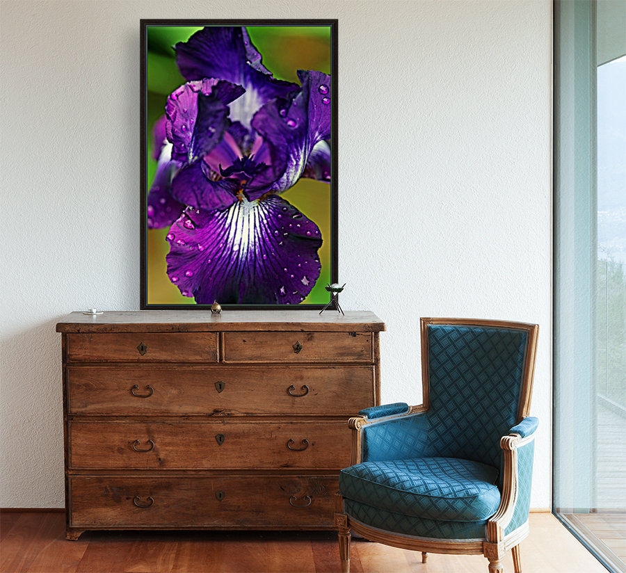 Purple With White Splash Iris with Floating Frame