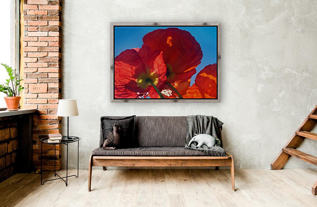 Red Poppy Sky  Art