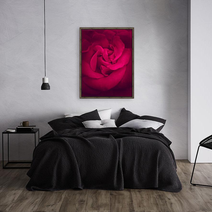 red rose background  Art