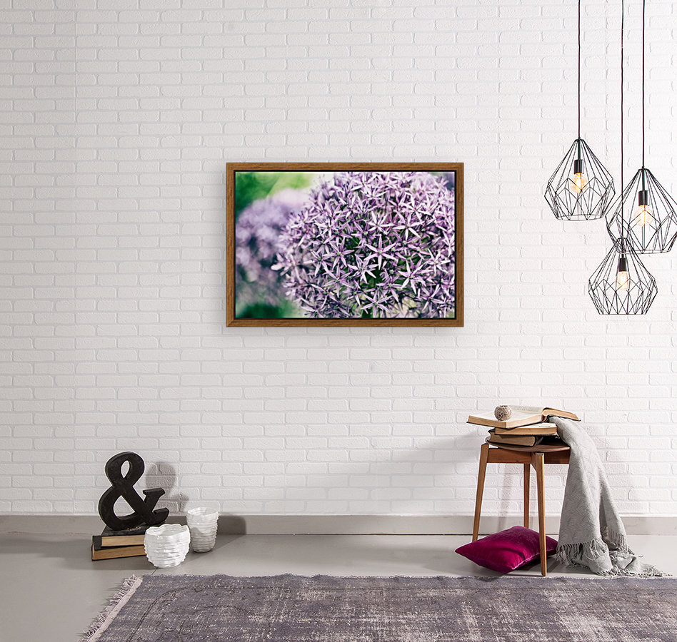 Allium in Bloom  Art