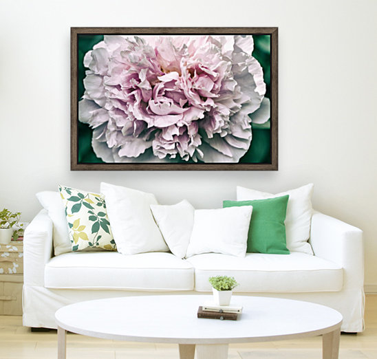 Peony with Floating Frame