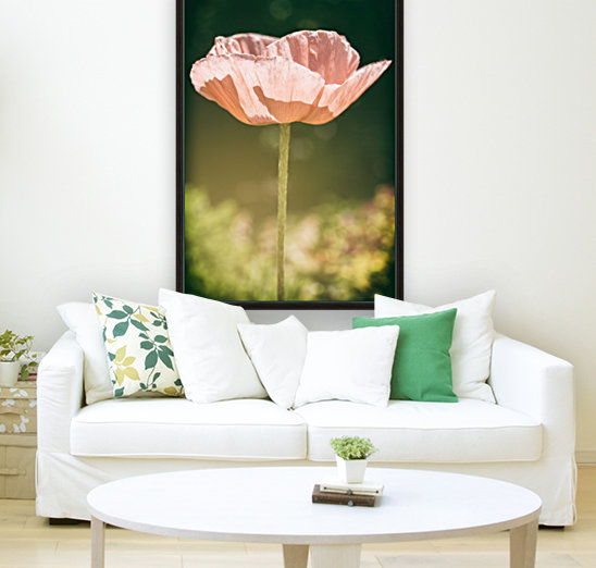 Poppy with Floating Frame