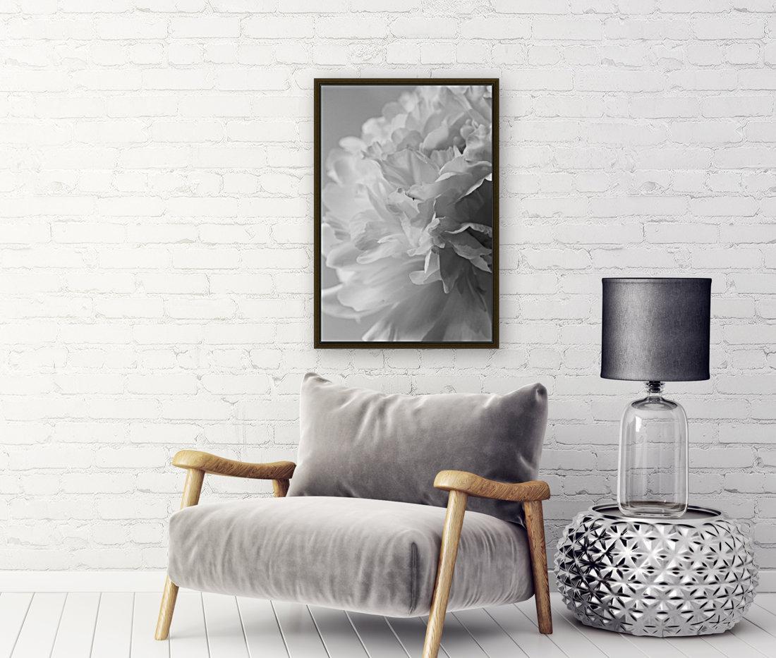 Softness in Black & White  Art