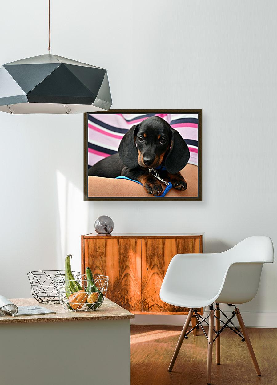 dachshund puppy young animal  Art