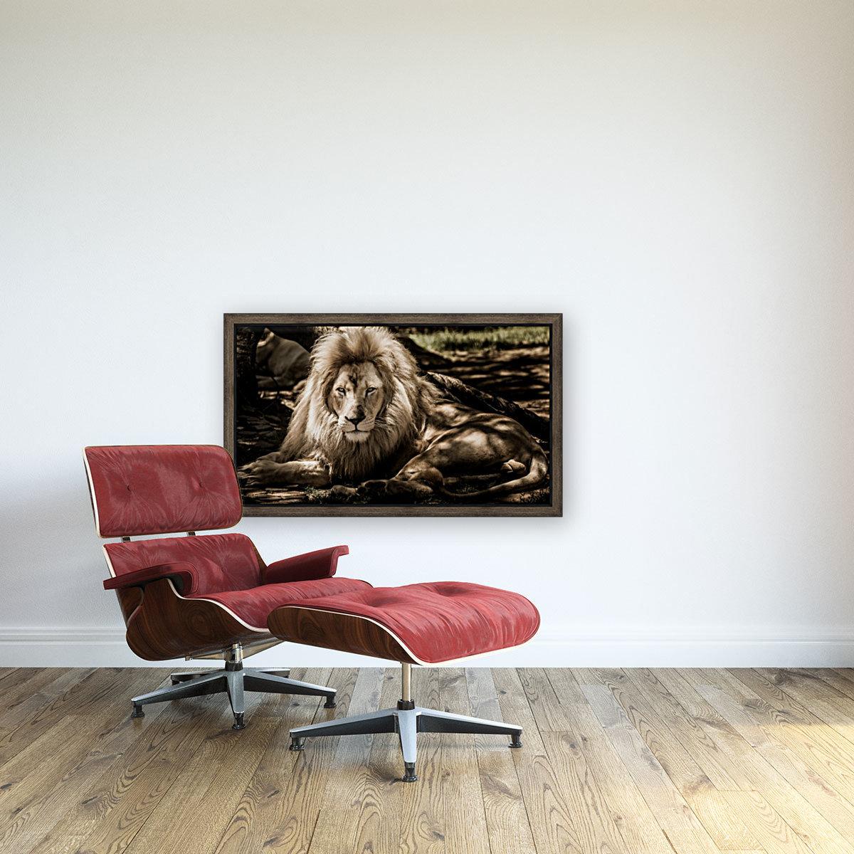 mammal lion animal portrait  Art