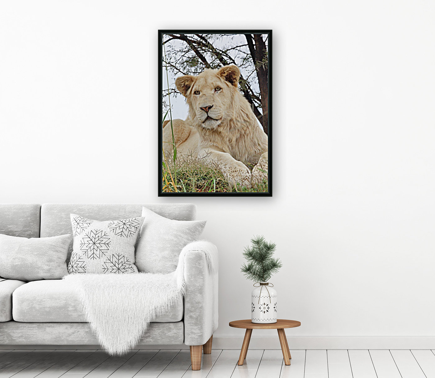 Young White Lion Male  Art