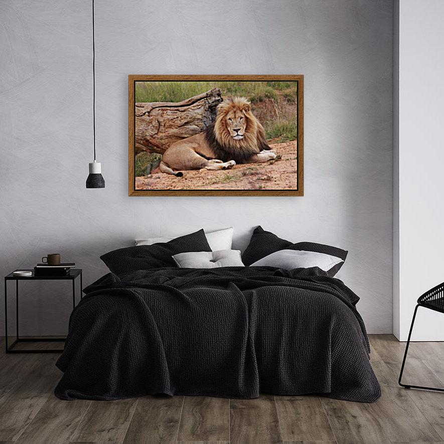 Brown Lion Male 9027  Art