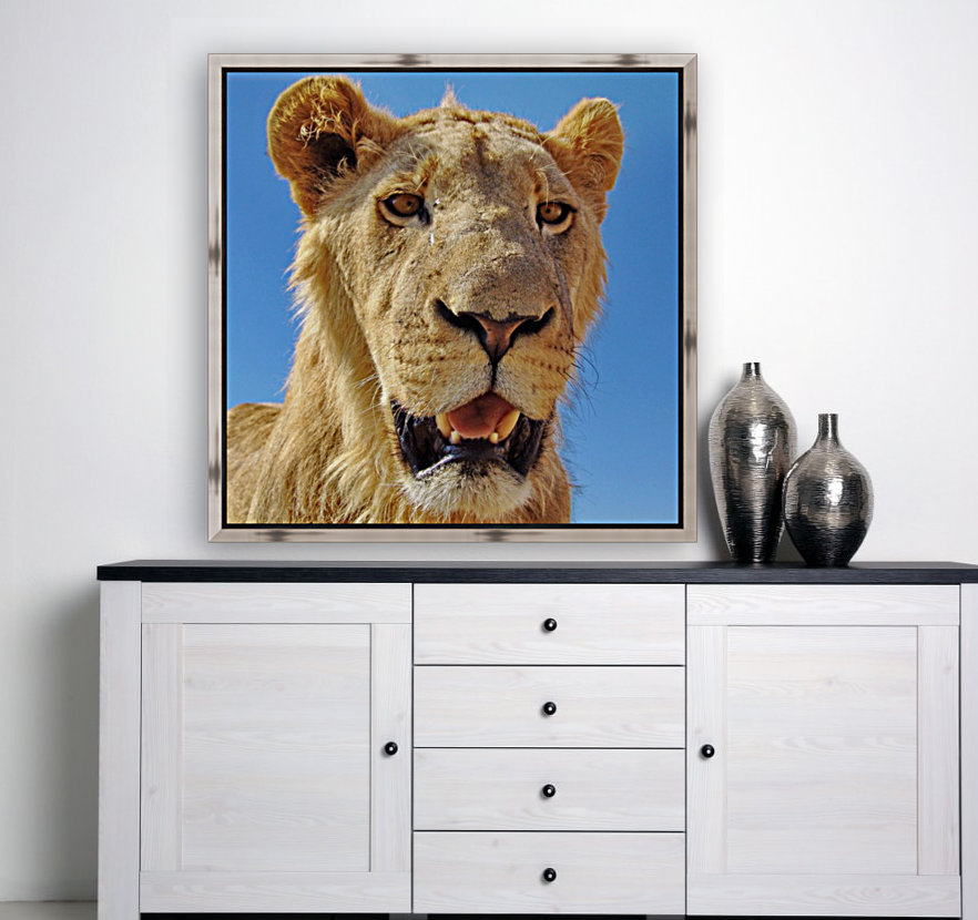 Lion close up square  Art