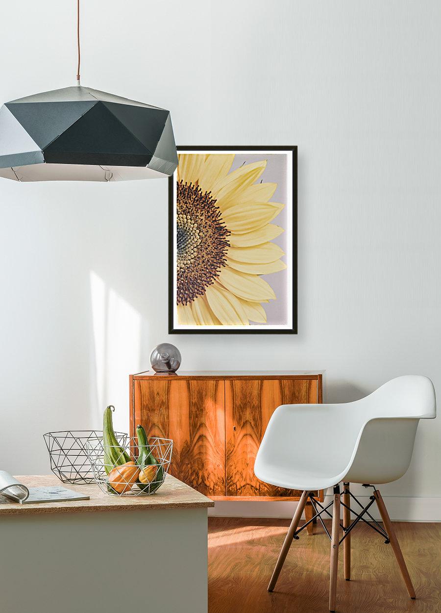 Sunflower   Art