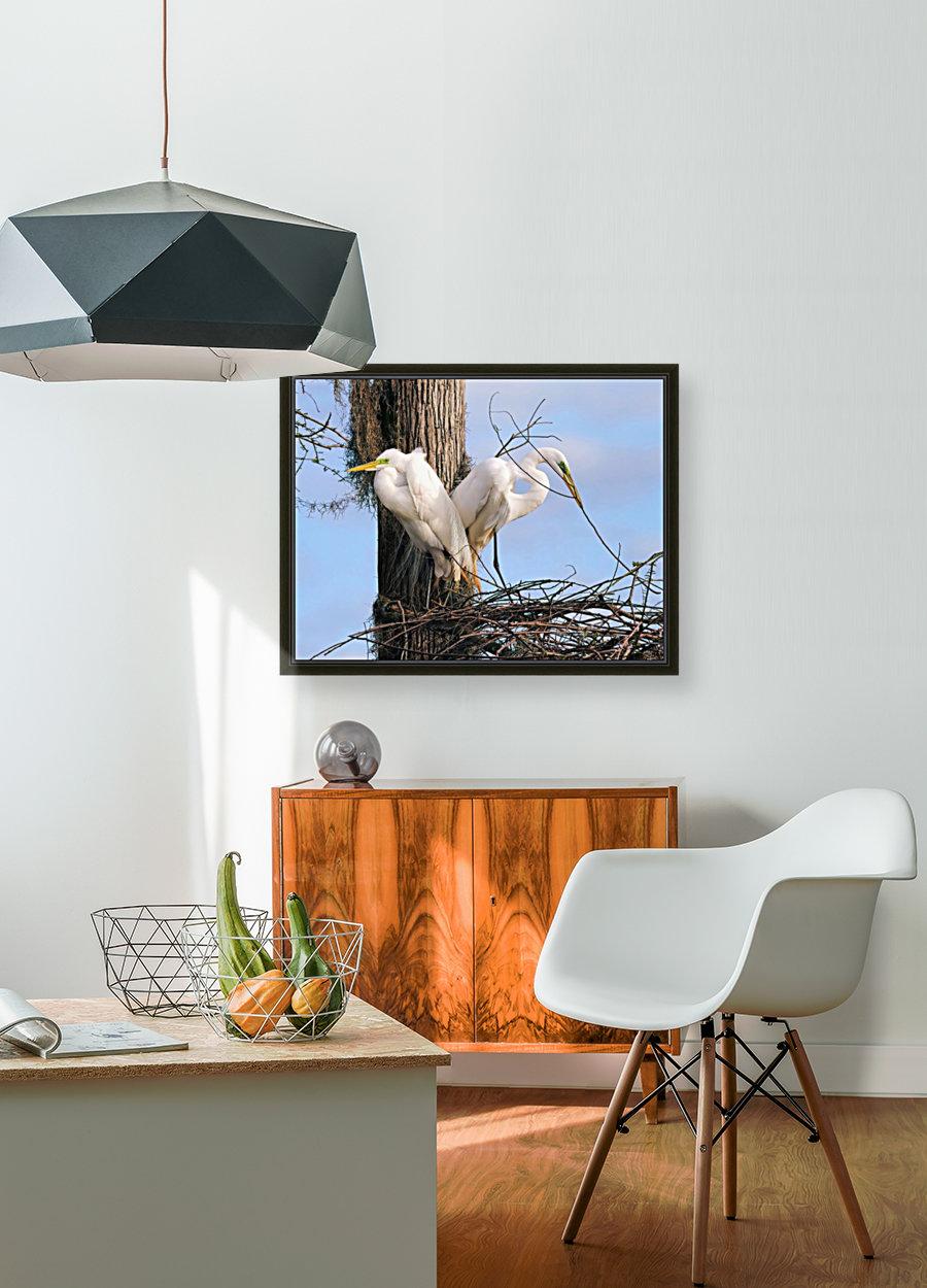 Mating Season - Great Egrets II  Art