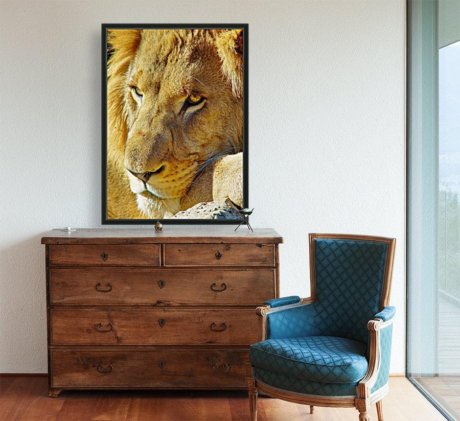 Lion Male  Art