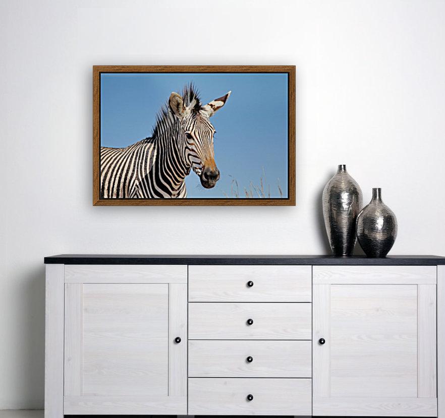 Zebra 5091  Art