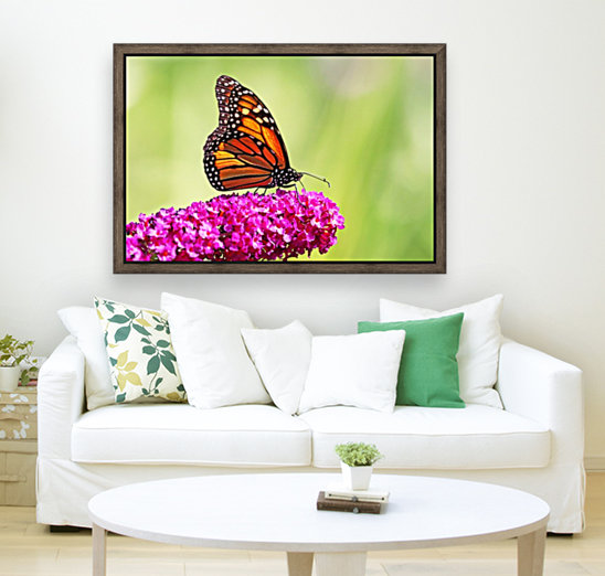 Monarch On Magenta Buddleia with Floating Frame