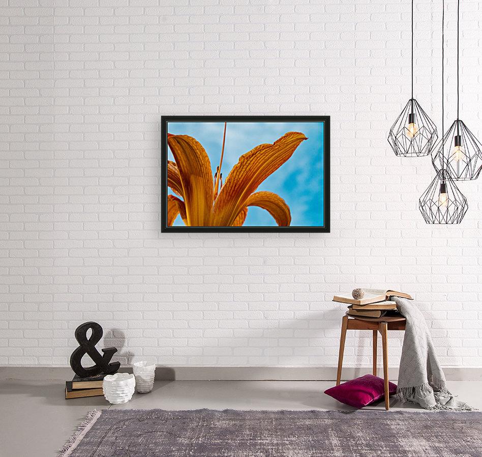 Orange Iris 3  Art