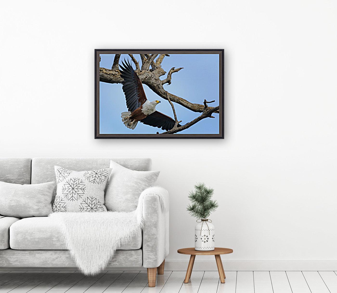 african fish eagle  Art