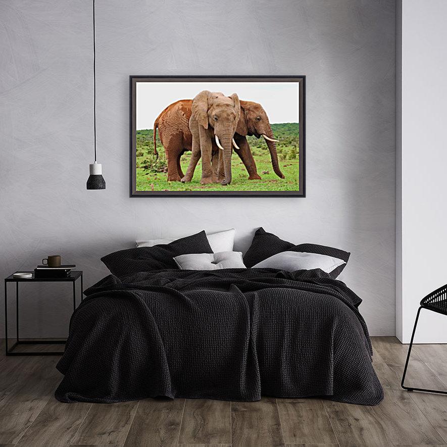 Addo Elephants 45  Art
