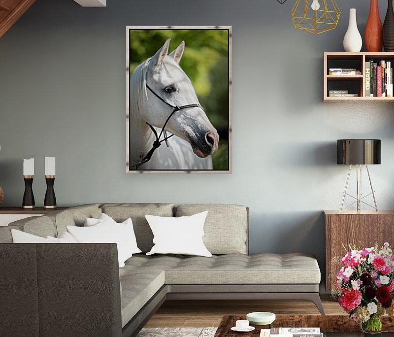 Horse Portrait  Art