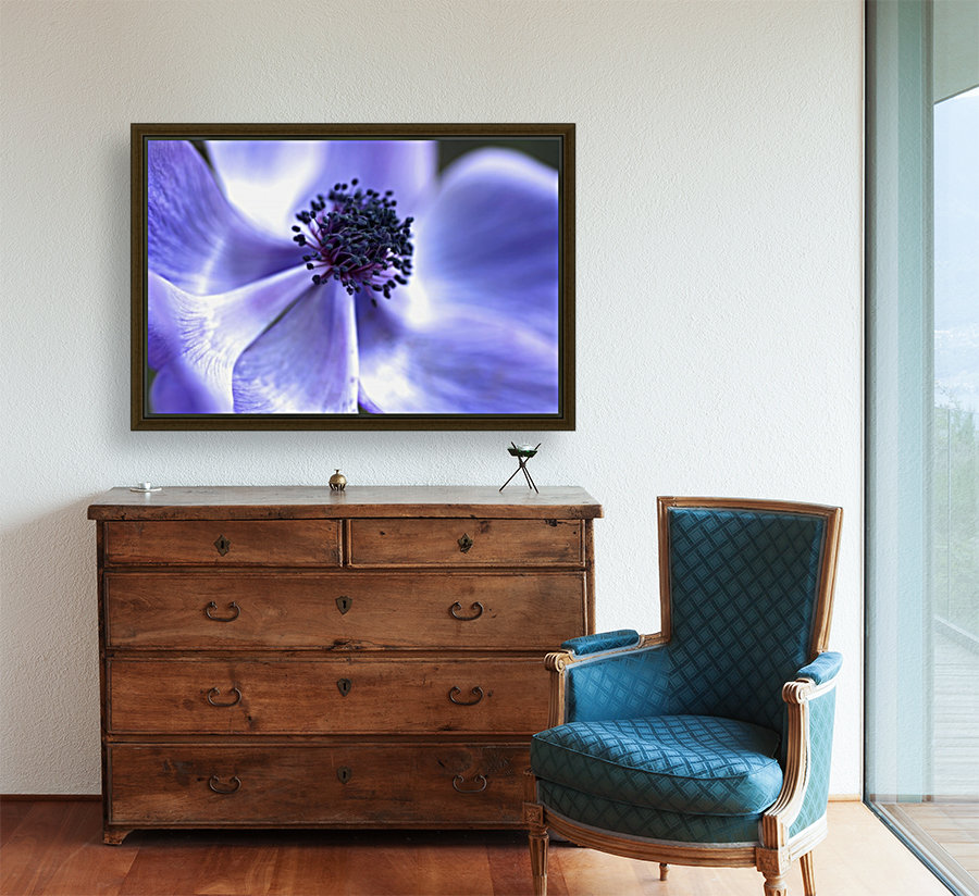 Blue Anemone with Floating Frame