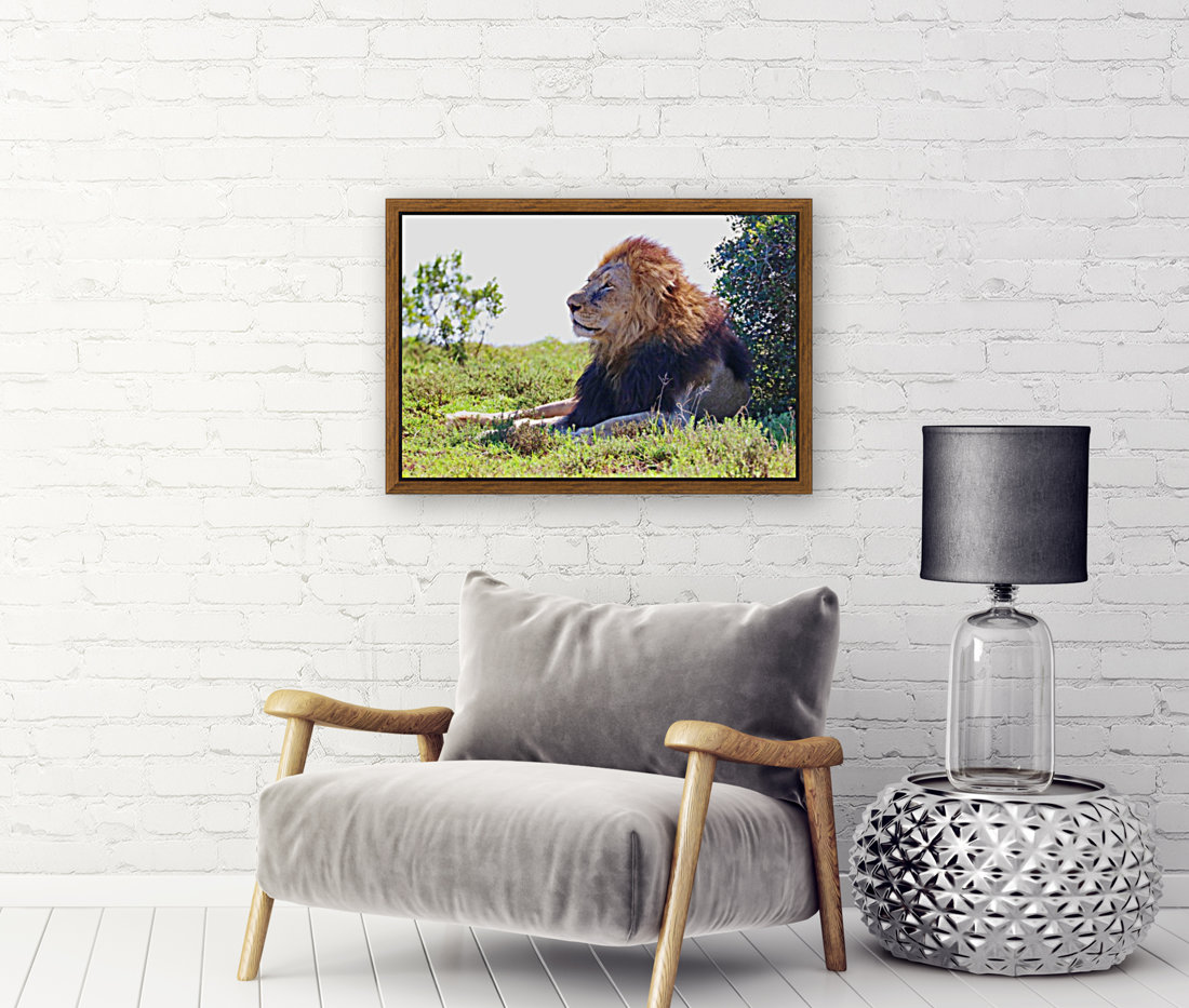 Lion Male in Addo 9240 with Floating Frame