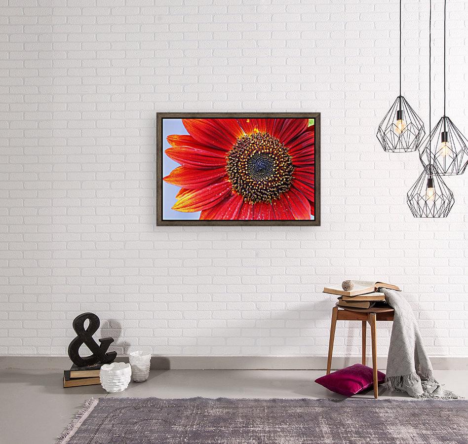 Ruby Red Sunflower  Art