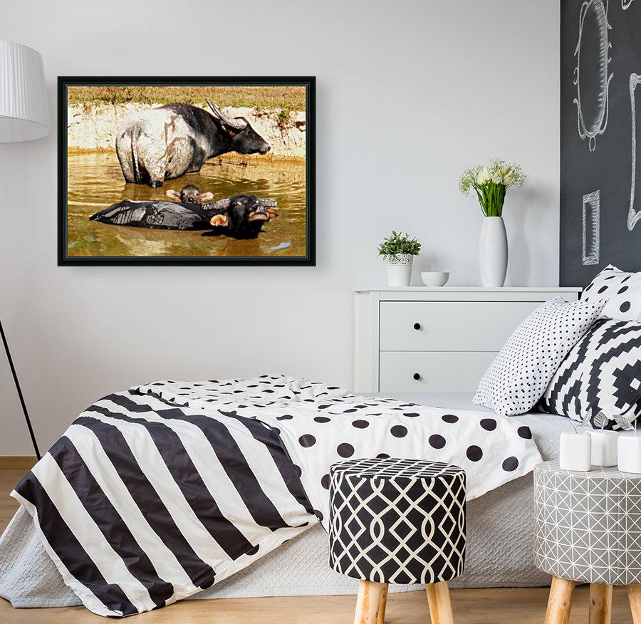 Water Buffalo Family Portrait  Art