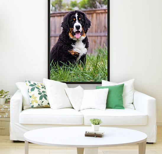 Bernese Mountain Dog Puppy 1  Art