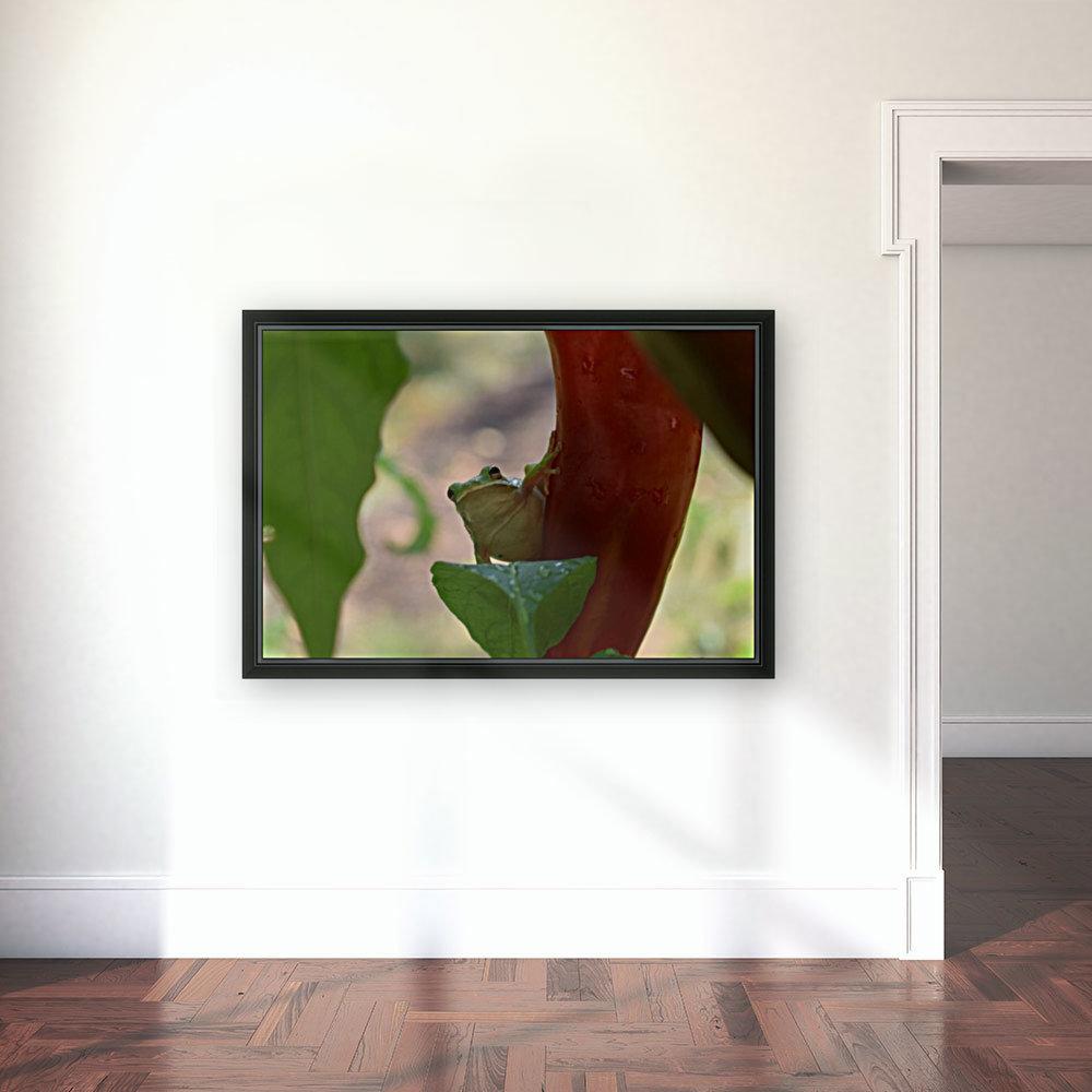 Peeping Frog  Art