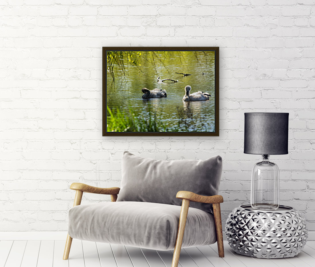 Cygnets with Floating Frame