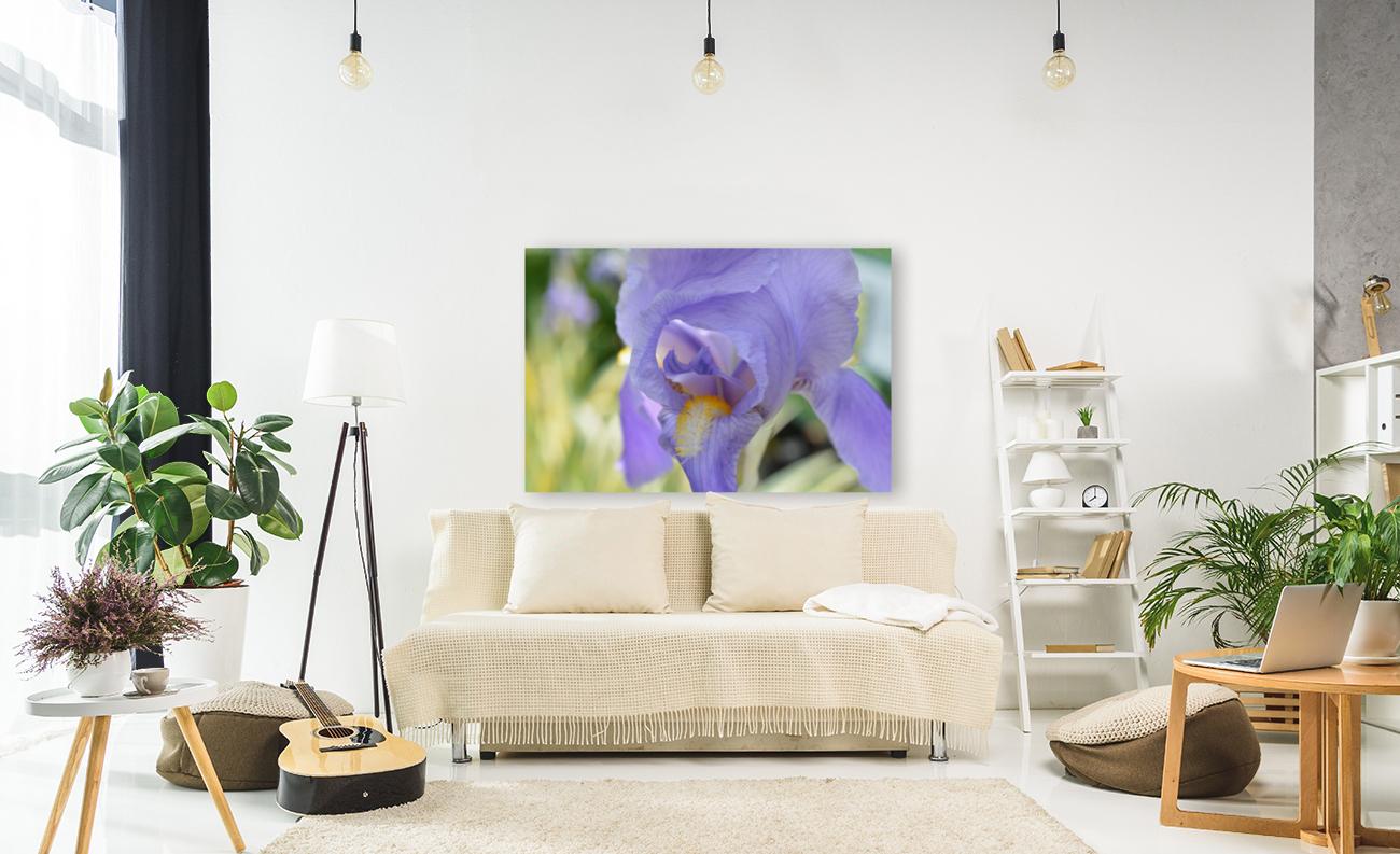 Purple Iris Photograph  Art