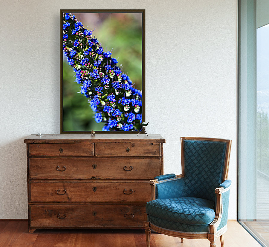 Veronica Flower Of  Spring with Floating Frame