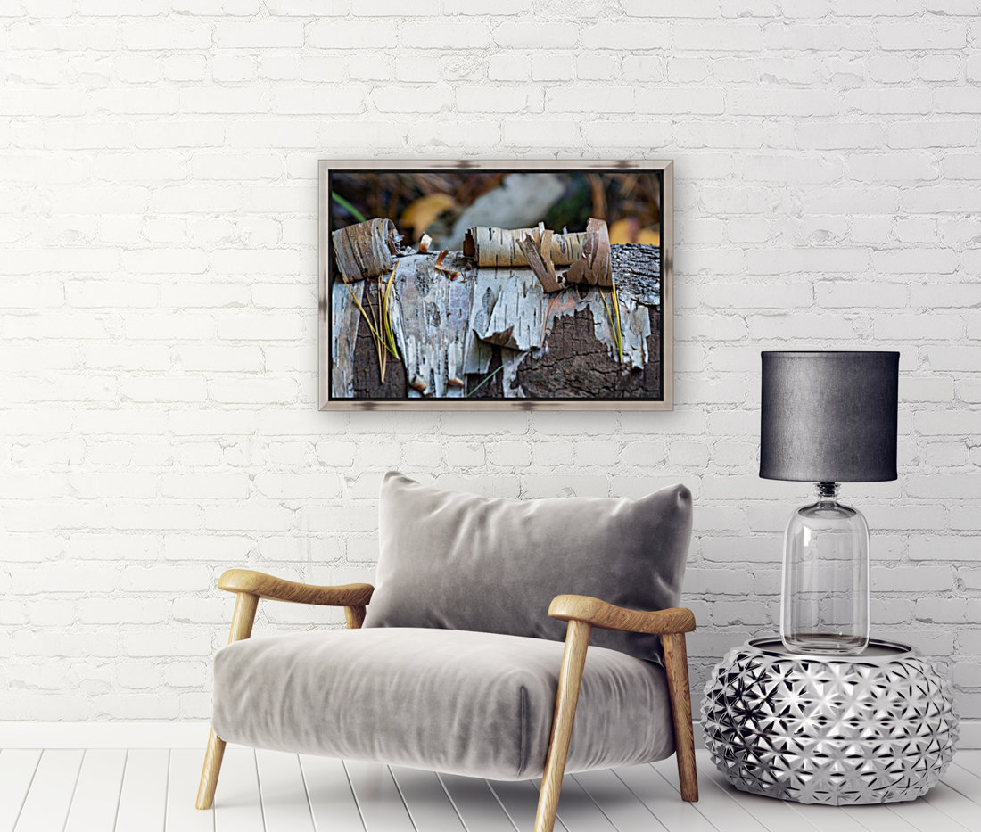 Fallen Birch with Floating Frame
