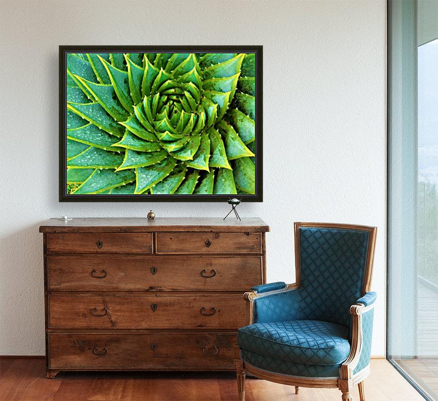 Cactus Spiral  Art