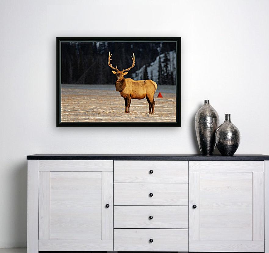 Bull Elk  Art