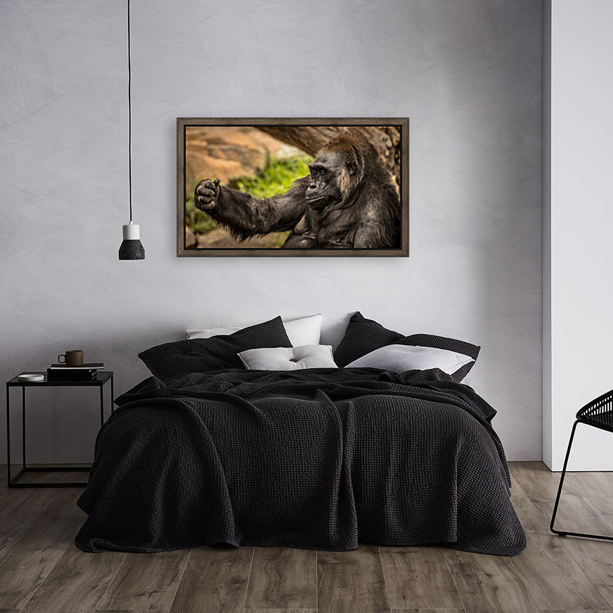 Quiet Gorilla Sleeping with Floating Frame