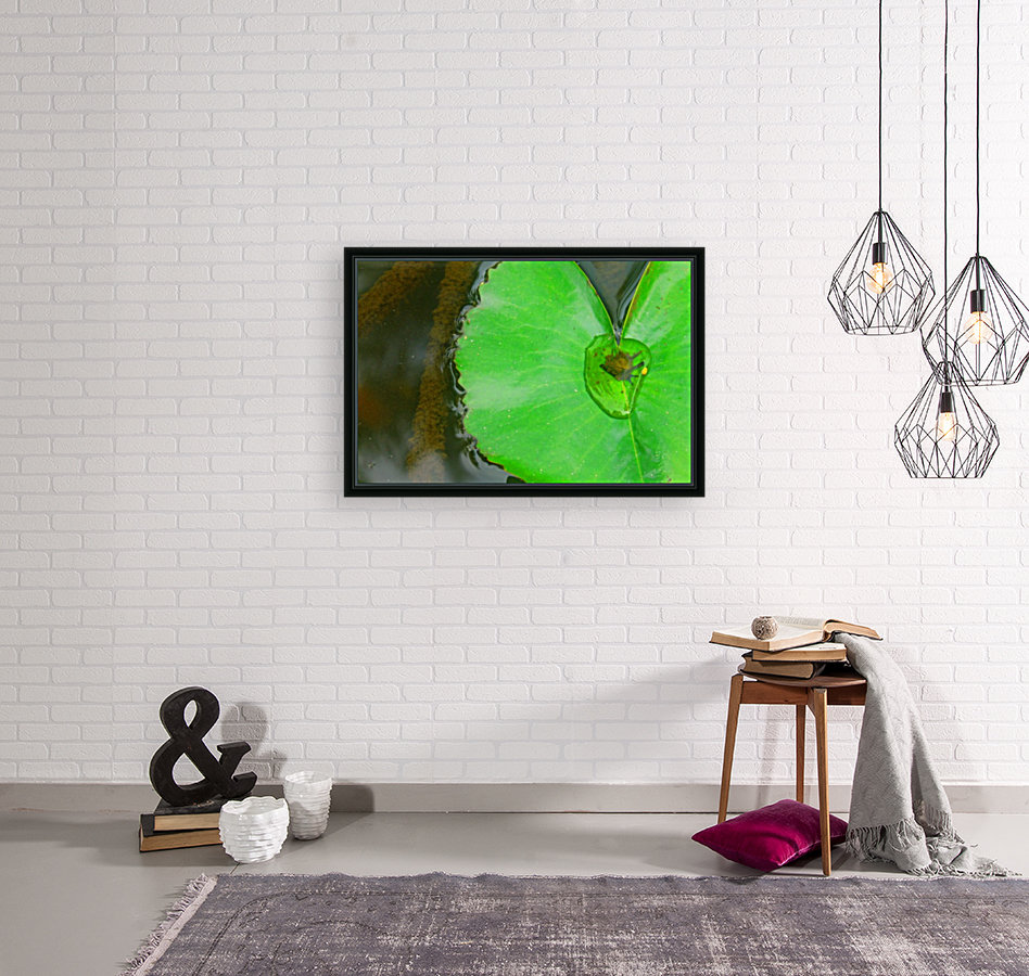 Lily Pad with Floating Frame