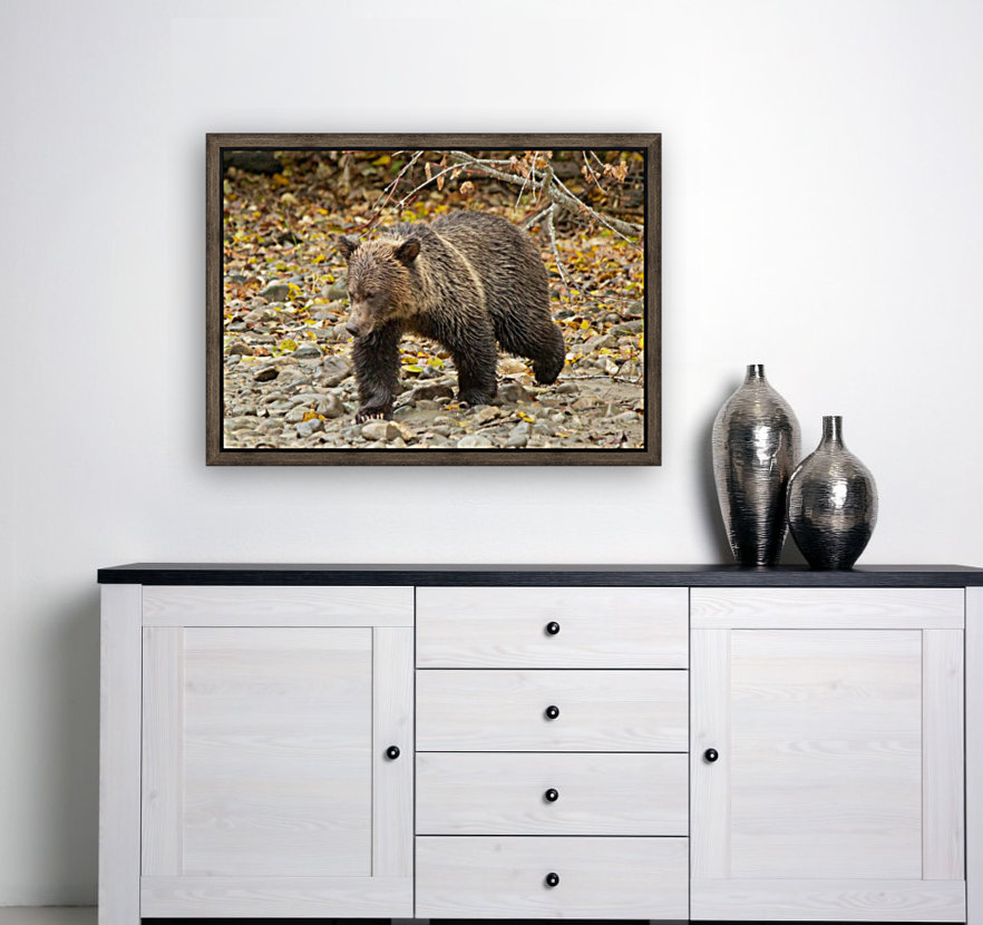 Grizzly Youngster  Art