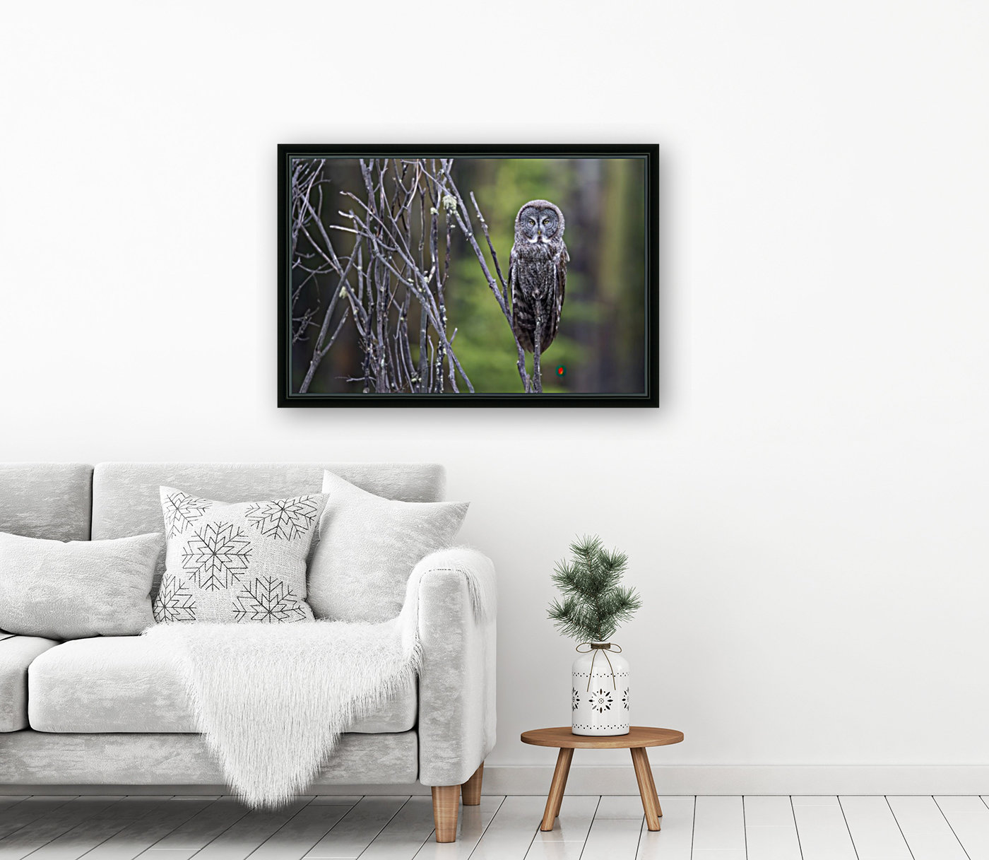 Great Grey Owl - Portait with Floating Frame