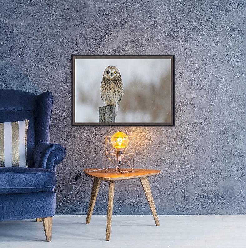 Short Eared Owl - Wink  Art