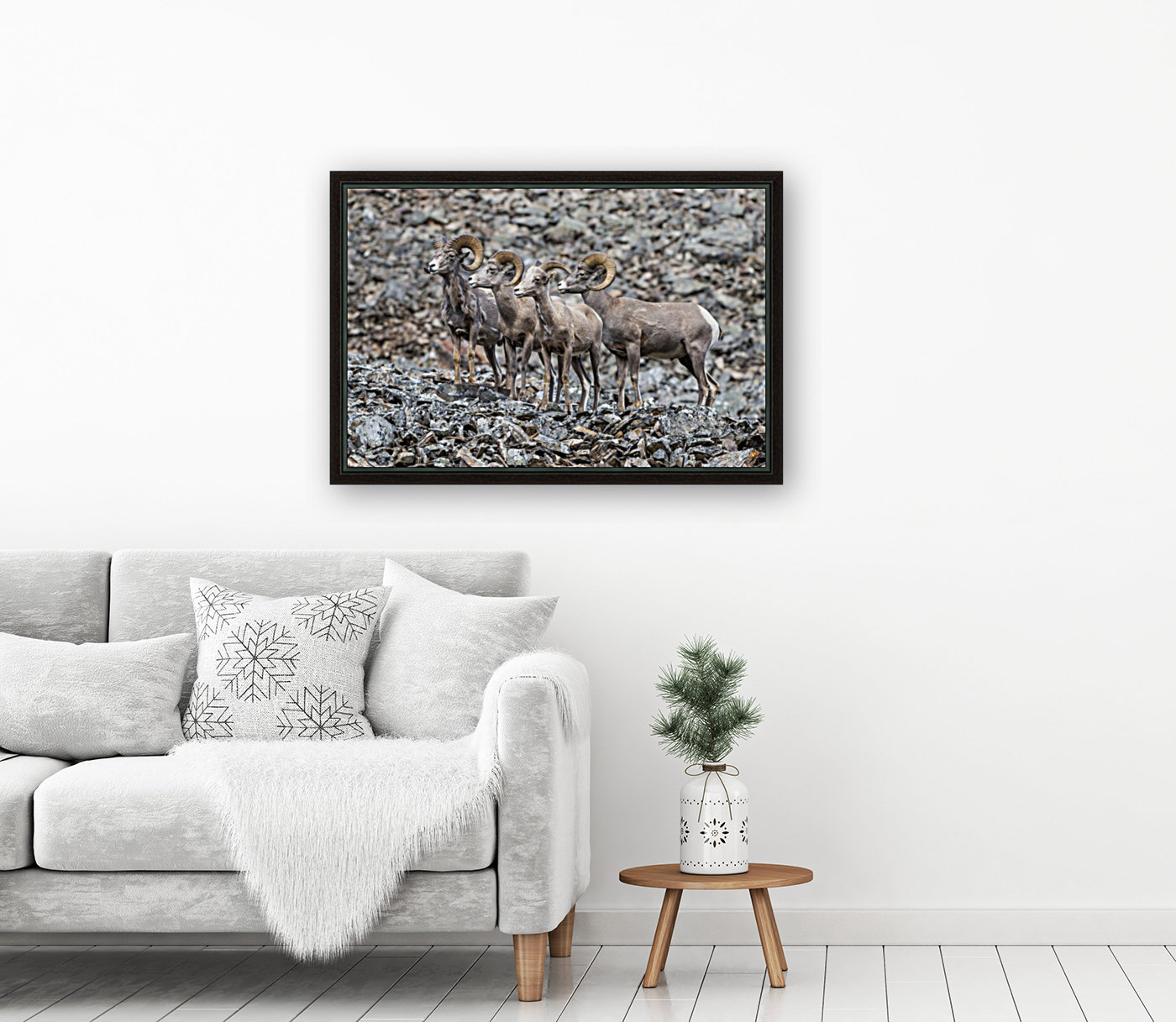 Big Horn Sheep - Family Portrait with Floating Frame