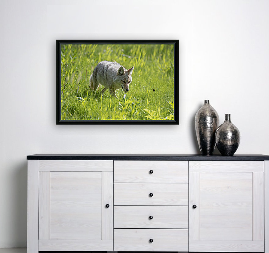 Coyote - Meadow Walk with Floating Frame