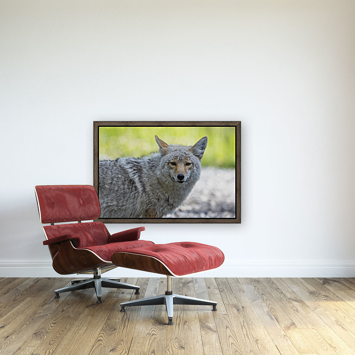 Coyote - Looking at you.  Art
