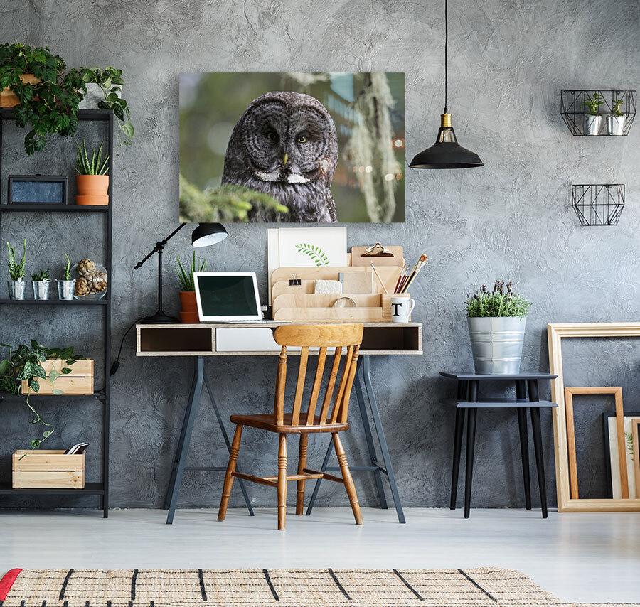 Great Grey Owl - Eye to Eye  Art