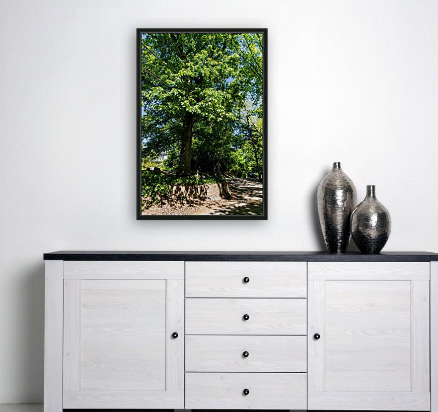 Tree Than Owns Itself   Athens GA 06567  Art